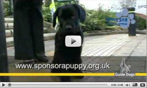 puppy video screenshot